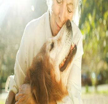 Vet To Pets Mobile Veterinary Services - Veterinarian In